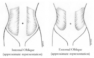 External & Internal Oblique